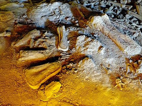 二连浩特国家地质公园旅游景点图片