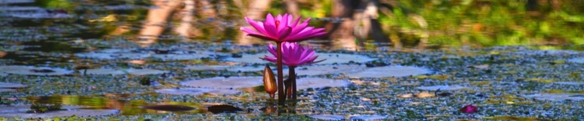 流连忘返与心存敬畏—盛放的斯里兰卡