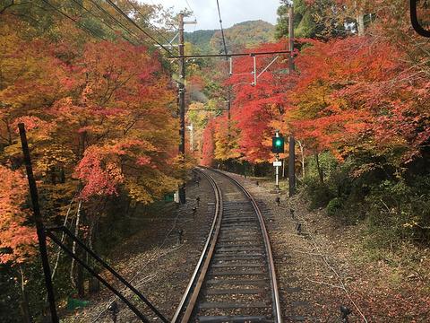 睿山电车红叶隧道旅游景点图片