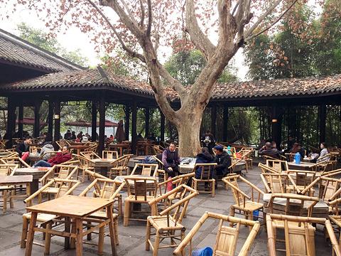 鹤鸣茶社旅游景点图片