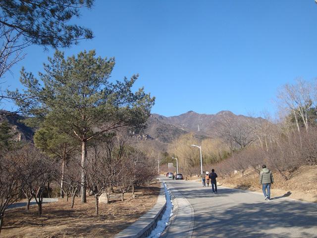"""""""公园的路修的很好,老人和小孩都能步行。鹫峰的温室相当一个篮球场大小,蜿蜒的小道在梅林间穿行富有情趣_鹫峰国家森林公园""""的评论图片"""