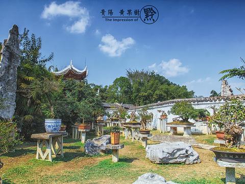 黄果树盆景园旅游景点图片