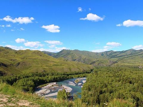 哈巴河白桦林旅游景点图片