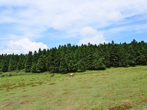 仙女山旅游景点图片