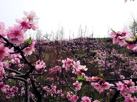 桃花故里旅游景点图片