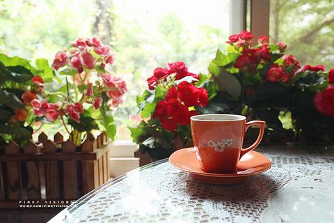 南庄山芙蓉咖啡艺廊