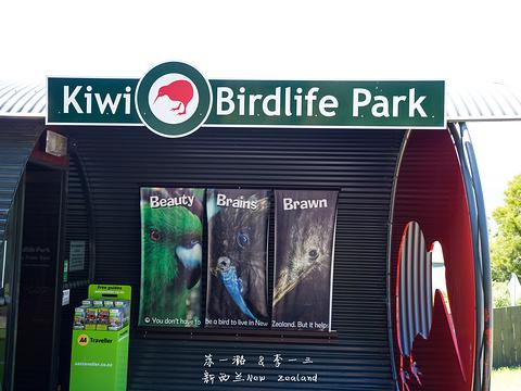 几维鸟和鸟类公园旅游景点图片