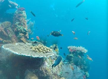 图兰本潜水