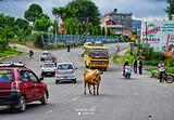 博卡拉湖滨区商业街