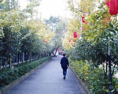 杭城桂花飘香的季节里
