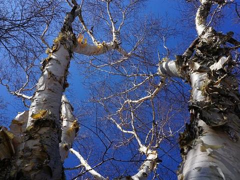 百花山自然保护区旅游景点图片