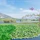 洱海月湿地公园