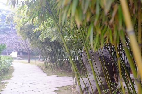 青龙寺旅游景点攻略图