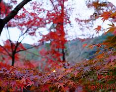 大众京都小众红叶狩