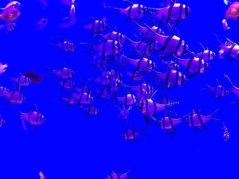 厦门海底世界旅游景点攻略图
