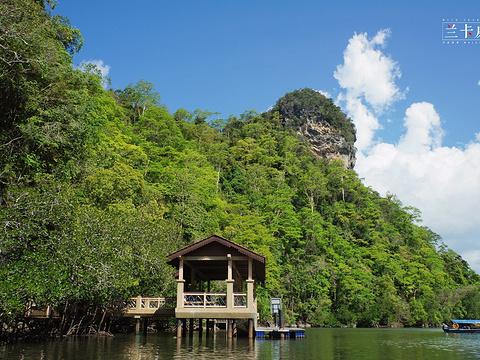 红树林生态保护区旅游景点图片