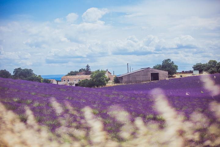 """""""每年入夏,南法的瓦朗索勒周边的薰衣草花田就会大片盛开,整个空气里都弥漫着薰衣草淡淡的花香_瓦伦索勒""""的评论图片"""