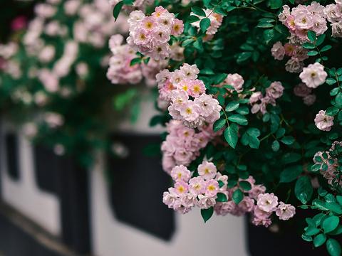 颐和路公馆区旅游景点图片