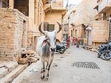 拉贾斯坦邦旅游景点攻略图片