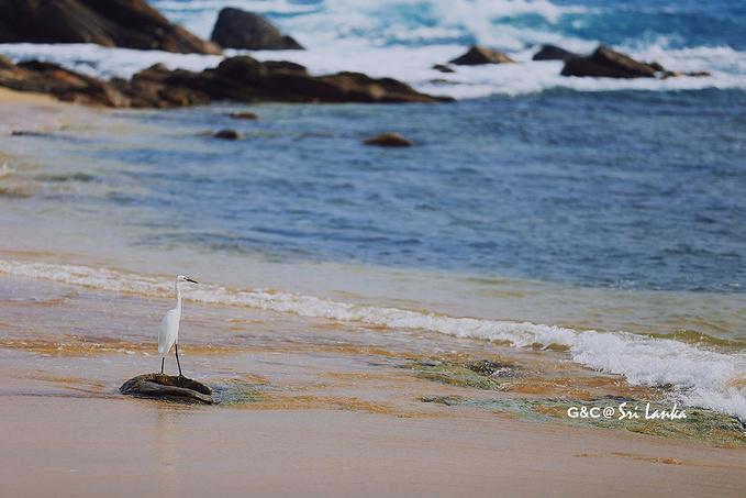 坦加勒海滩图片
