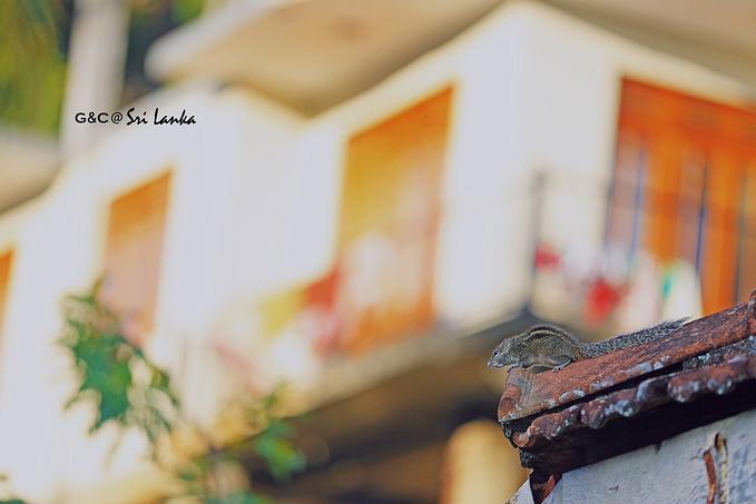 旅客之家酒店(Hotel Travellers Nest)图片