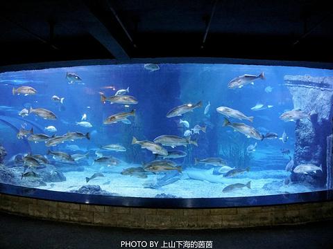 杭州长乔极地海洋公园旅游景点图片