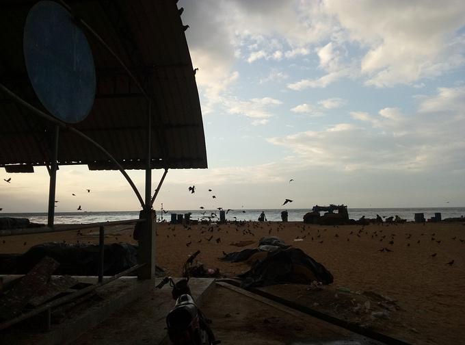 尼甘布中心鱼市场图片