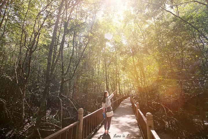 """""""最地道(省钱):不难发现瓜镇或是珍南海滩附近的旅行社或旅馆酒店都有红树林游玩项目,半天游、一日游等_红树林生态保护区""""的评论图片"""
