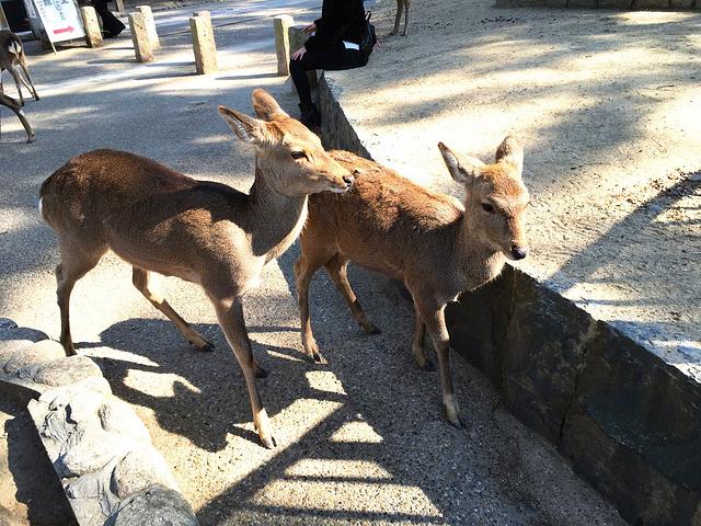 """""""兴福寺的入口出左边便是奈良最有名的奈良公园。兴福寺不大,建议安排30-45分钟参观即可_兴福寺""""的评论图片"""