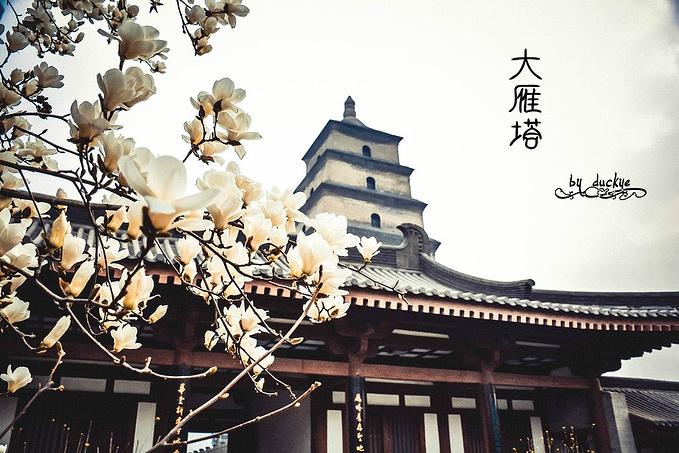 大雁塔·大慈恩寺图片