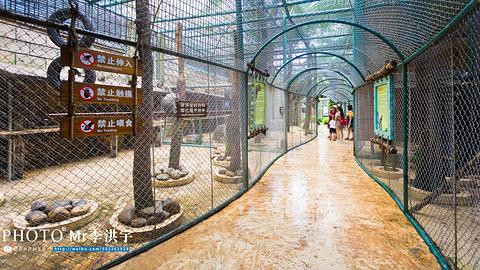宋城彩色动物园旅游景点攻略图