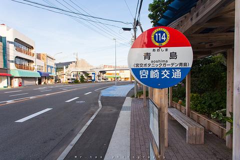 青岛神社的图片