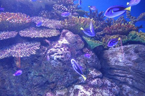 凯恩斯水族馆