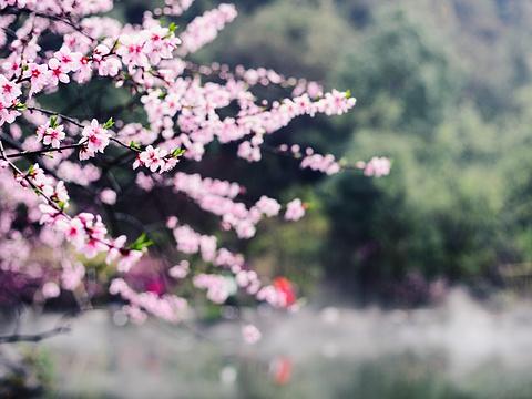酉阳桃花源旅游景点图片