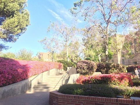 加州大学洛杉矶分校纪念品店旅游景点攻略图