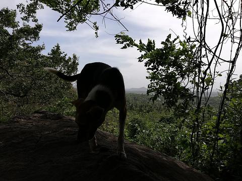丹布勒石窟旅游景点图片
