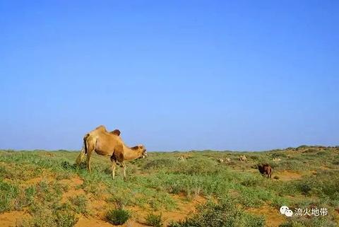 腾格里沙漠旅游景点攻略图