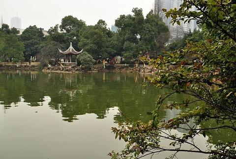 晓园公园的图片