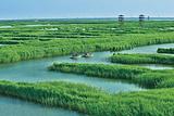 高邮湖芦苇荡湿地公园