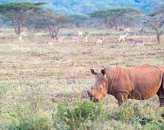 南非:颠覆你对非洲的想象,狂野与优雅并存的彩虹之国