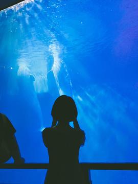 大连圣亚海洋世界旅游景点攻略图