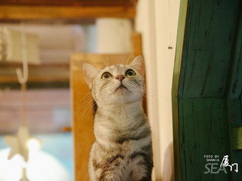顶澳仔猫街旅游景点图片