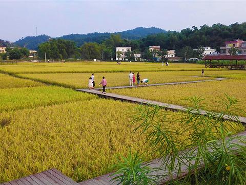 红山村旅游景点图片