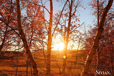 桦木沟国家森林公园旅游景点攻略图