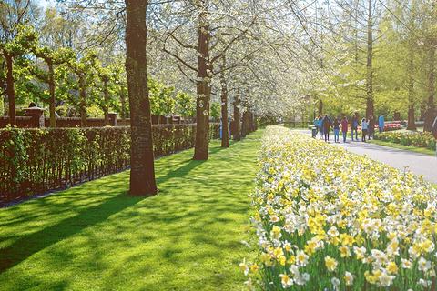 阿姆斯特丹魔幻四日游,一览花都荷兰