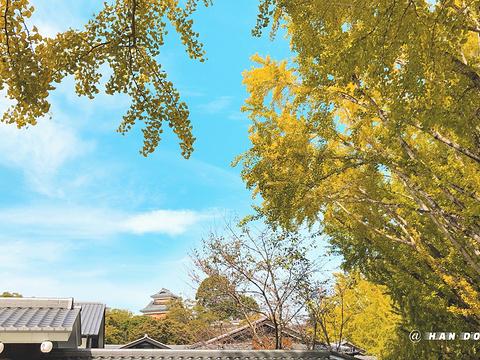 城彩苑 樱之小路旅游景点图片
