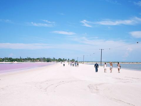 粉红湖旅游景点图片