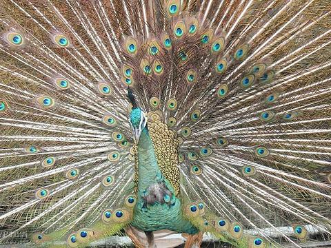 西双版纳热带动物园旅游景点图片