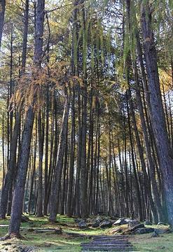 蜂桶寨自然保护区