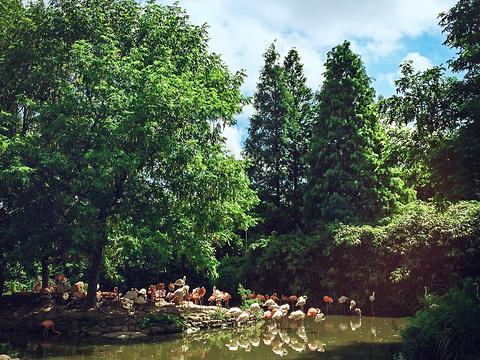 上海野生动物园旅游景点图片
